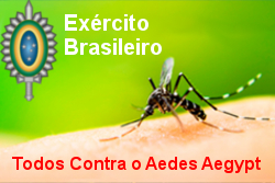 aedes aegypt